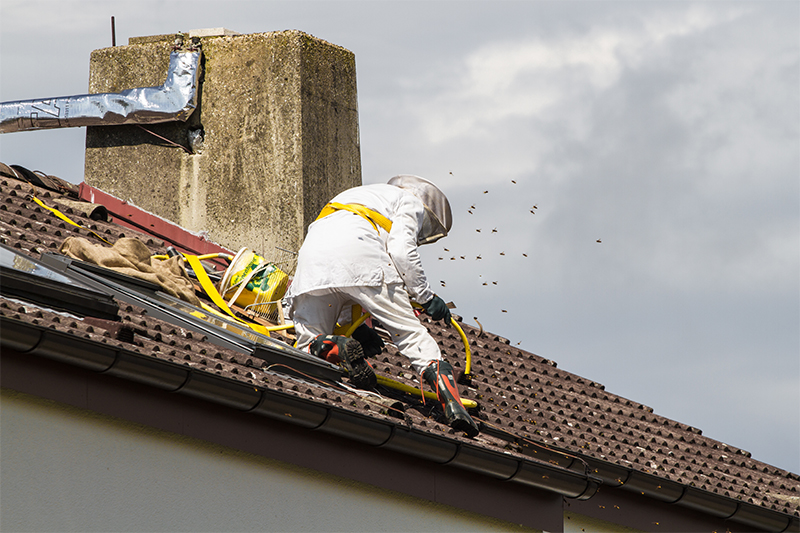 Bee Pest Control in Guildford Surrey
